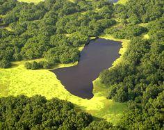 Reserva Biológica do Lago Piratuba, localizada no estado do Amapá,