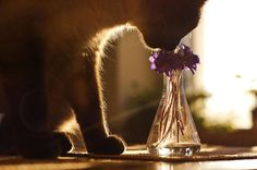 Poetic Pictures of Animals Smelling Flowers  The nature is often the author of kind surprises. The website BoredPanda chose to ask its contributors of making a pictures lists showing with poetry animals smelling flowers. We can see cats squirrels white tigers bears or pandas with the flora of their environment.                 #xemtvhay