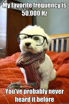 Hipster physicist dog.