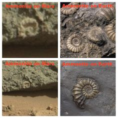 Fossil On Mars Points To Ancient Ocean With Life, March 31, 2014, UFO Sighting News.
