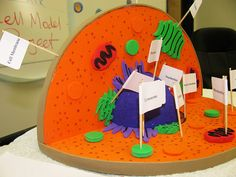 PLANT CELL PROJECT by Florida Science, via Flickr ~ there are actually several ideas from several sources, but only pictures... no directions