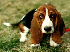"""You have perfected the """"puppy dog eyes."""" 