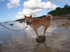 ...that is so peanut...I've never seen a dog that dislikes being in water as much as him :)