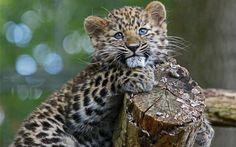 <p>It's not a secret that deforestation, climate change, and habitat degradation is rapidly endangering plant and animal species around the world. So much so, that scientists have long warned of a sixth extinction. </p>