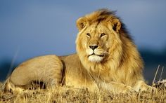 We have pictures of many different species of animals just take a look