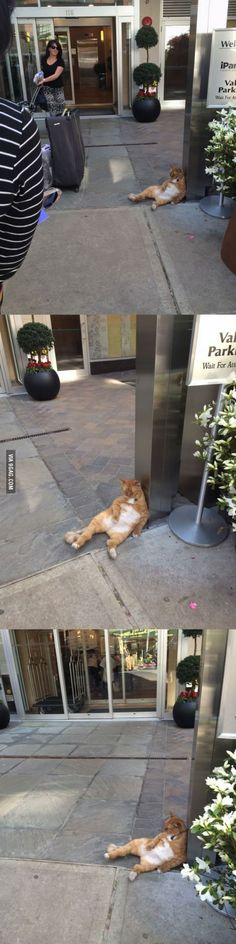 The laziest hotel doorman of all time.