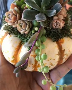😊 🌟 ✨ 🥰 🧊 🎁 💦 instantpot inspiration diy ootd fashion embroidery watercolor upcycling chocolate tips exterior upcycling drawing cake Pumpkin Arrangements, Succulent Arrangements, Planting Succulents, Planting Flowers, Succulent Gardening, Cacti Garden, Succulent Landscaping, Succulent Planters, Indoor Gardening