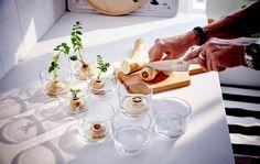 Her er 5 af vores bedste idéer til at genanvende grøntsager og få dem til at vokse igen.