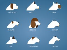 Dog icon concept