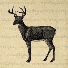 Digital Deer Image Graphic Printable Deer Illustration Download Artwork Vintage Clip Art Jpg Png Eps 18x18 HQ 300dpi No.2133