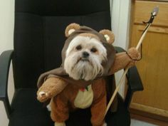 Ewok puppy. This just makes me laugh.