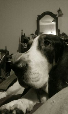 Love hounds dog eyes!