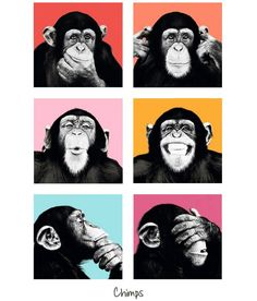 Pool Multicolour Chimps Poster Poster: Buy Pool Multicolour Chimps Poster Poster at Best Price in India on Snapdeal
