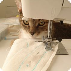 sewing miss cat