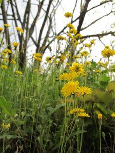 #flower #yellow