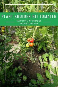 Herb Garden, Vegetable Garden, Garden Plants, Growing Greens, Garden Markers, Grow Your Own Food, Dream Garden, Permaculture, Fruits And Vegetables