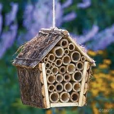 Mason bees - Bing images