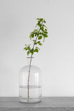 A single branch in a glass vase #simple