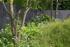 The Homebase Garden – Time to Reflect, in association with Alzheimer's Society designed by Adam Frost