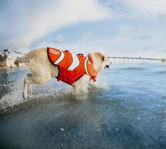 Adjustable Dog Life Jacket with Rescue Handle       >>>>> Buy it now    http://amzn.to/2cAtB2V