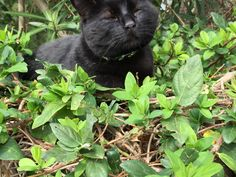 Neko (gato en japonés), más Neko que nunca