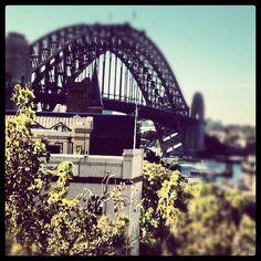 The iconic Harbour Bridge #MBFWA