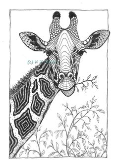 Giraffe- matted print from original drawing sketch ideas in Pencil Drawings Of Girls, Ink Pen Drawings, Zentangle Drawings, Zentangle Patterns, Drawing Sketches, Animal Drawings, Giraffe Drawing, Giraffe Art, Wildlife Art