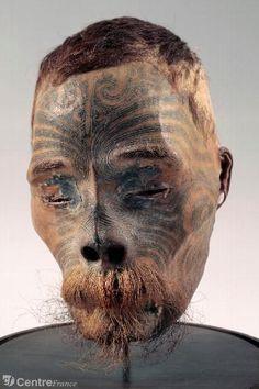 collection crânes nouvelles zealande - Google Search