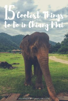 Almost every traveller has Chiang Mai on their itinerary while backpacking through Thailand. And with good reason. Chiang Mai is filled with an abundance of weird and wonderful things to do. Check out 15 of the coolest things to do in Chiang Mai.