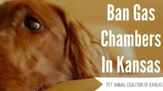 Petition · Kansas Legislature: Ban Gas Chambers · The details of what the animals are put through are disgusting. Please sign. Change.org