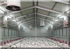 The poultry farms for sale is strong durability. The frame of poultry farm uses cold-formed thin-walled steel components frame corrosion resistance strong. Woodworking Guide, Custom Woodworking, Woodworking Projects Plans, Poultry Business, Poultry House, Poultry Cage, Chicken Cages, Chicken Houses, Shed Design Plans