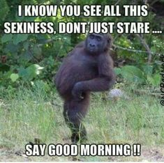 54 Ideas funny good morning hilarious humor for 2019 Funny Good Morning Memes, Good Morning Quotes For Him, Morning Humor, Good Morning Funny Pictures, Hilarious Pictures, Good Morning Beautiful Meme, Good Morning Animals, Good Morning Sexy, Good Morning Kisses