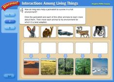 Animal Adaptations - Interactive Learning Sites for Education Lg variety of Science games on many topics