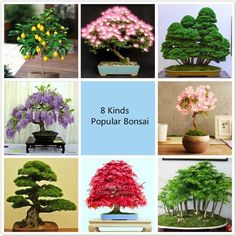 Potted Plant Seeds, 8 Kinds Bonsai Tree Seeds, 227 Pcs Popular Plant Seeds Perfect Diy Home Garden Bonsai Package Bonsai Seeds, Tree Seeds, Bonsai Plants, Potted Plants, Rare Flowers, Amazing Flowers, Plantas Bonsai, Seed Packaging, Indoor Flowers
