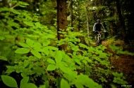 Photo Of The Day: Reuben Krabbe - Rider: Mike Watton. Location: Whistler, BC. #MTB #Photography
