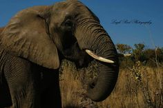 Kruger National Park, African Elephant, Lonely Planet, Elephants, North West, Travel Guide, South Africa, Planets, Wildlife