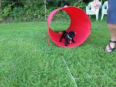 Mopsie 2012 op puppycursus