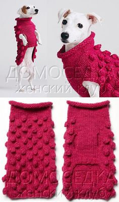 Diy Dog Clothes Knit Ideas For 2019 The Effective Pictures We Offer You About Pet accessories car A Small Dog Sweaters, Small Dog Clothes, Pet Clothes, Cat Sweaters, Dog Clothing, Dog Sweater Pattern, Crochet Dog Sweater, Dog Crochet, Chat Crochet