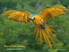 Pantanal | Brasil <3 Ara ararauna