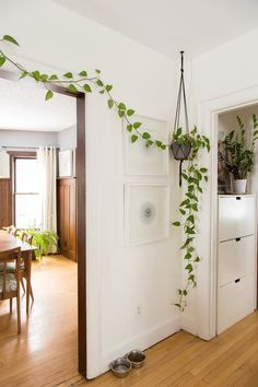 "A recent New York Times article highlighted the current ""it"" plant of the home design world: the fiddle-leaf fig plant"