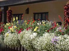 Inn of the Governors, balcony flowers Santa Fe, New Mexico. New Mexico Homes, New Mexico Usa, Mexico Art, Places To Travel, Places To Go, Balcony Flowers, Balcony Planters, New Mexico Santa Fe, Mexico Style