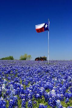 Bluebonnets, Texas flag and a farm tractor. The makings of a great State.