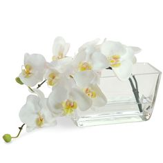 Get in the mood for our orchid sale by browsing our website for your favorite arrangements!