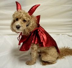 Dog Costume Halloween Red Devil  2 Sizes by HeavenlyPet on Etsy, $24.00