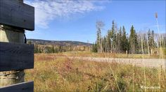 Fall Colors Walcott Forest Service Road. Photos taken on September 29, 2016 Houston, BC. Photos by Brian Vike Houston, British Columbia.