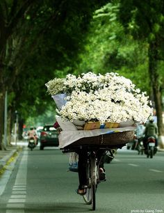 Margaridas no Vietnam My Flower, Fresh Flowers, Beautiful Flowers, White Flowers, Cut Flowers, Beautiful World, Beautiful Places, Foto Art, We Are The World
