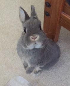 My Netherland dwarf bunny <3