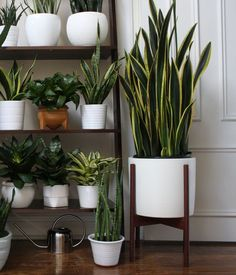 "This month's theme for Urban Jungle Bloggers is all about dressing your plants in creative plant pots. This is a very important topic for house plant owners because unless we have built-in planters around the house, your plants are likely going to be in some kind of stand-alone container that needs to ""play nice"" with the rest of your decor. In this blog post, I'll tell you about where I got some of my planters and my approach to buying them. Something important to note: most of my p..."