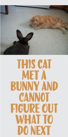 This Cat Met A Bunny And Cannot Figure Out What To Do Next!