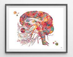 Cranial Nerves Anatomy Watercolor Print Neurology Art Print Cranial Nerves and Brainstem Diagram olfactory optic nerves Poster Brain Art